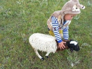 the 2nd youngest clapping a wounded sheep (broken leg)